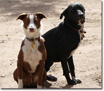 Jet and Sady McNab dogs