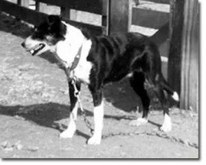 Boots McNab dog