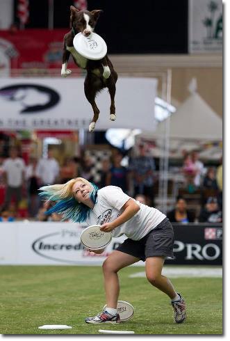 McNab Frisbee dog
